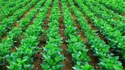 Микроудобрения,  ЖКУ,  кормовые добавки от производителя