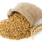 Продам пшеницу, ячмень, овес, муку, отруби