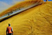 продам зерно,  произодства Казахстан